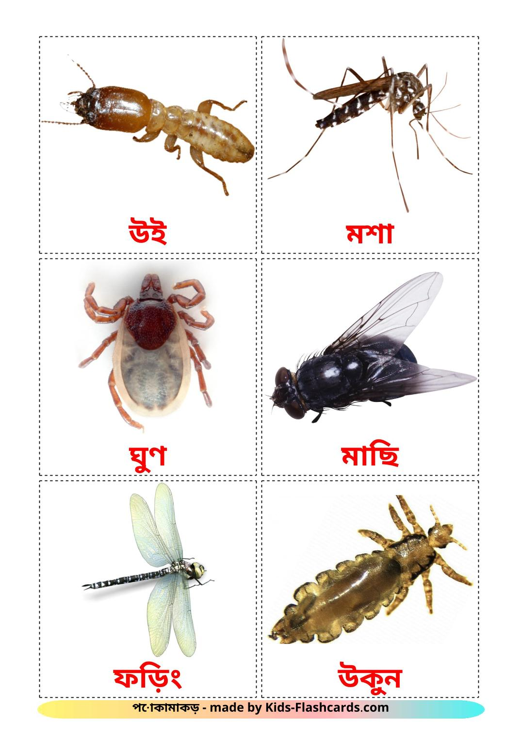 Insects - 23 Free Printable bengali Flashcards