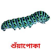 শুঁয়াপোকা picture flashcards