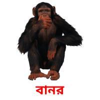 বানর picture flashcards