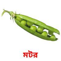 মটর picture flashcards