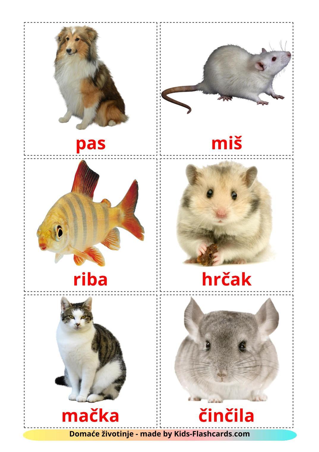 Domestic animals - 10 Free Printable bosnian Flashcards
