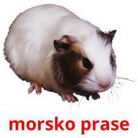 morsko prase picture flashcards