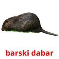 barski dabar picture flashcards