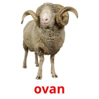 ovan picture flashcards
