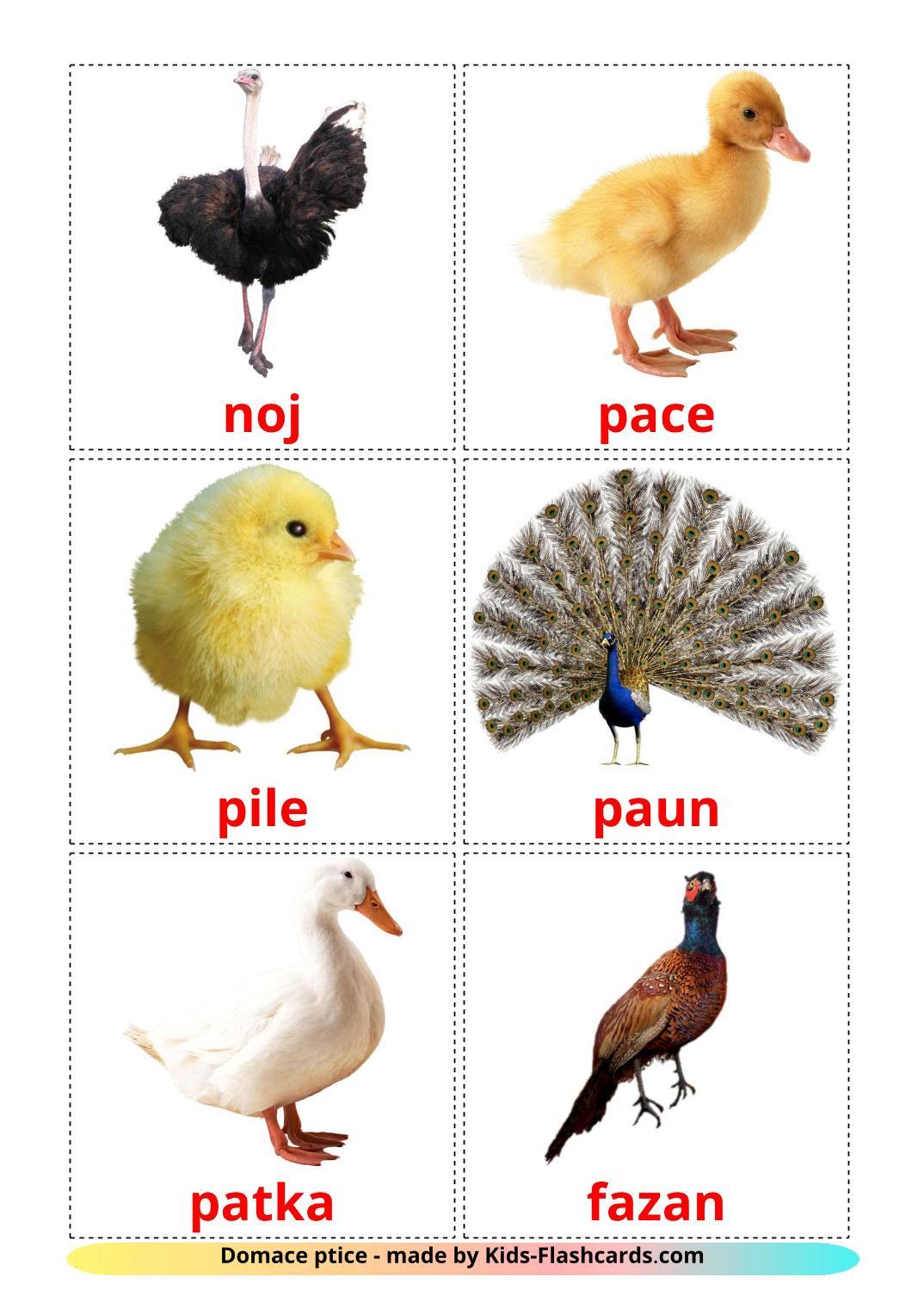 Farm birds - 11 Free Printable bosnian Flashcards