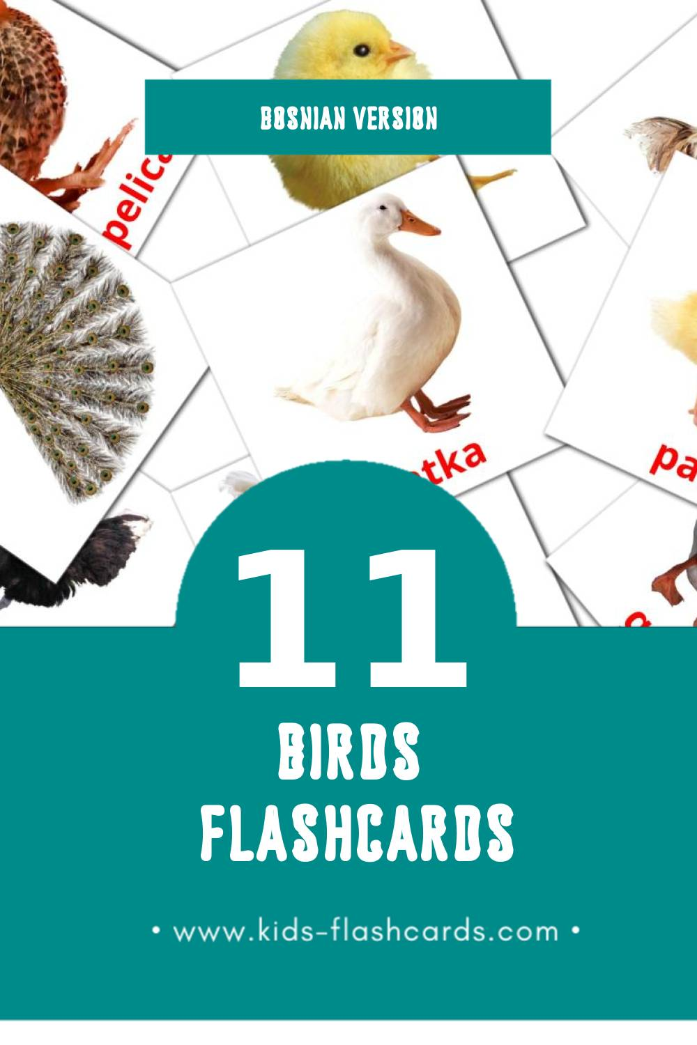 Visual Životinje Flashcards for Toddlers (11 cards in Bosnian)