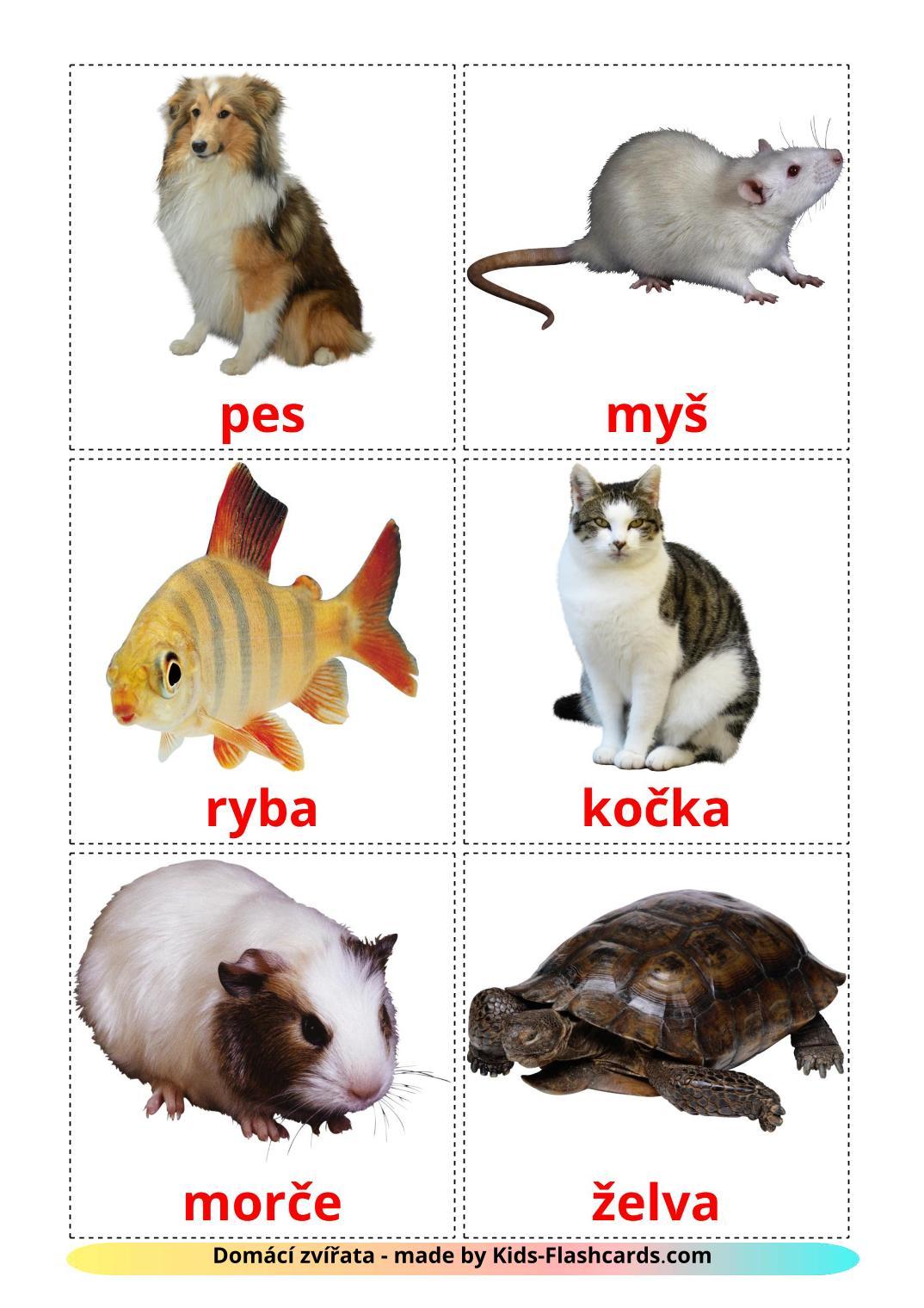 Domestic animals - 10 Free Printable czech Flashcards