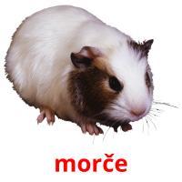 morče picture flashcards