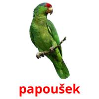papoušek picture flashcards