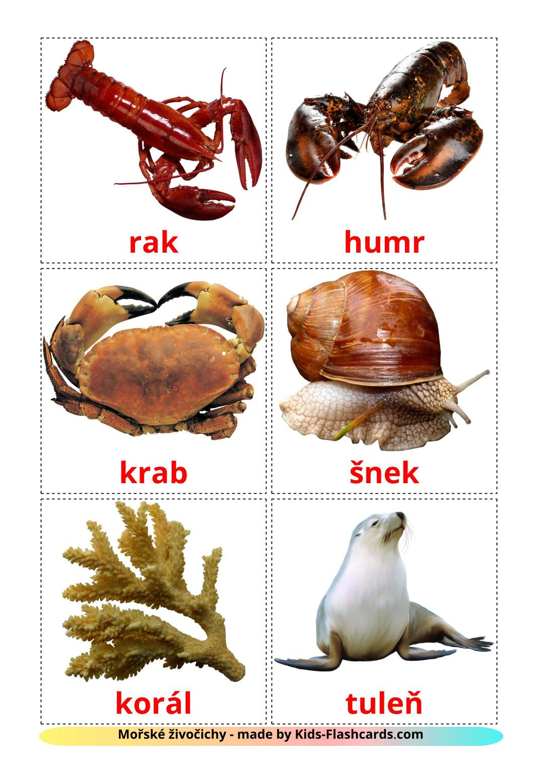 Sea animals - 29 Free Printable czech Flashcards