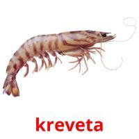 kreveta picture flashcards