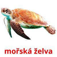 mořská želva picture flashcards