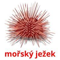 mořský ježek picture flashcards