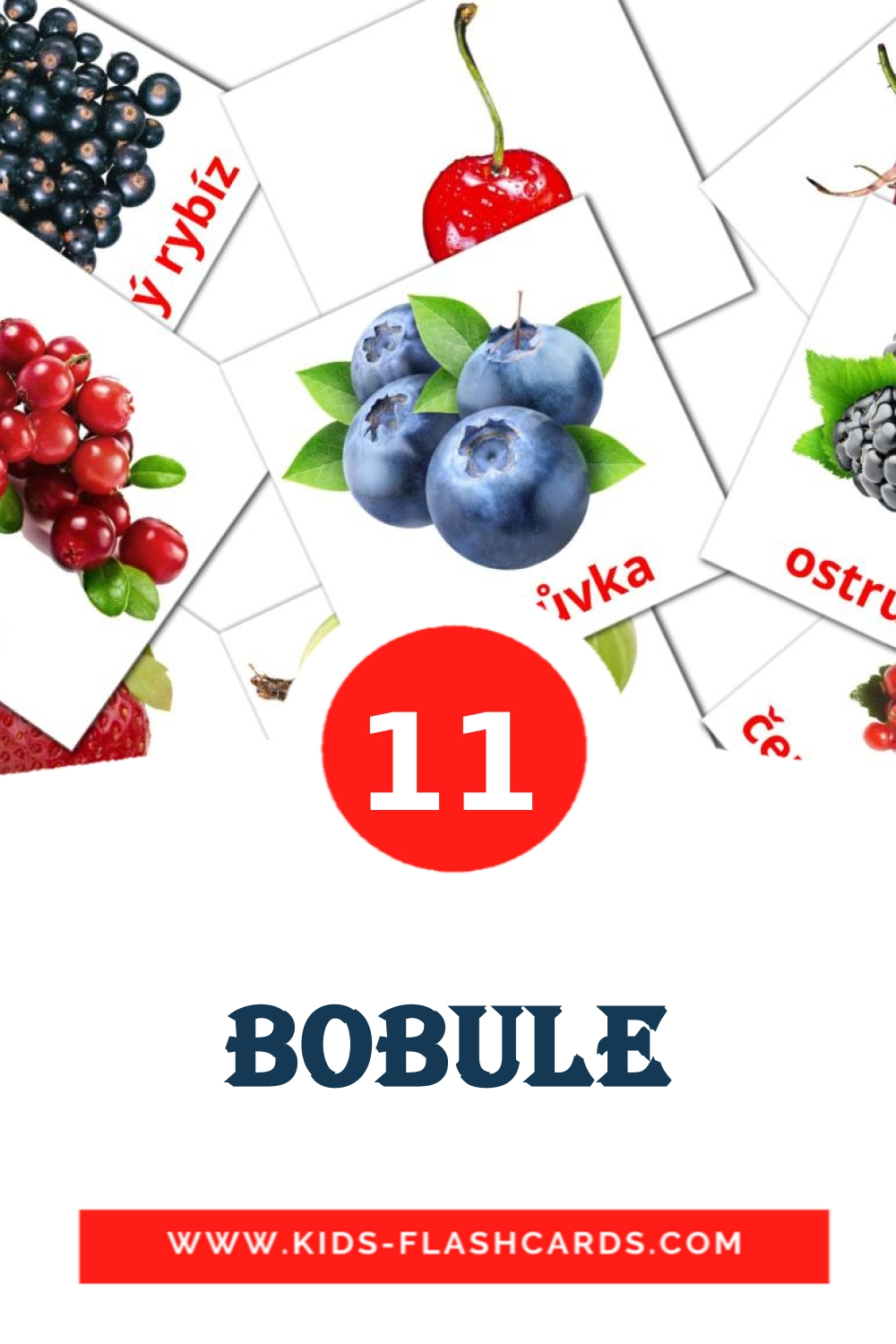 11 Bobule Picture Cards for Kindergarden in czech