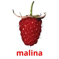 malina picture flashcards