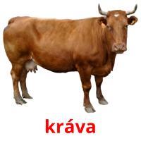 kráva picture flashcards