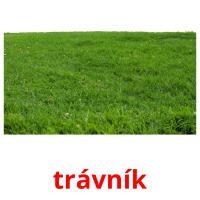 trávník picture flashcards