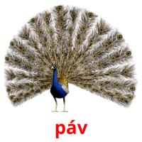 páv card for translate