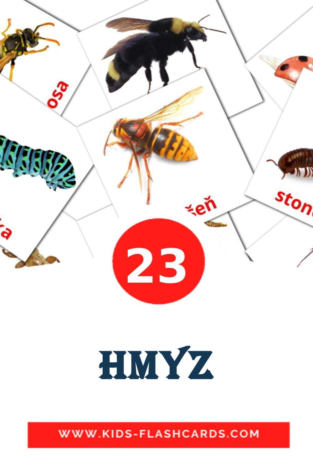 23 Hmyz Picture Cards for Kindergarden in czech