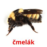 čmelák picture flashcards