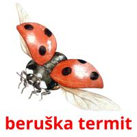 beruška termit picture flashcards
