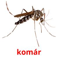 komár picture flashcards