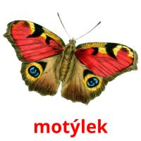 motýlek picture flashcards
