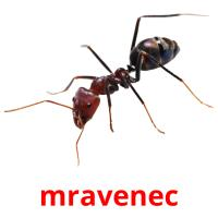 mravenec picture flashcards