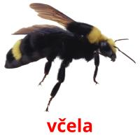 včela picture flashcards