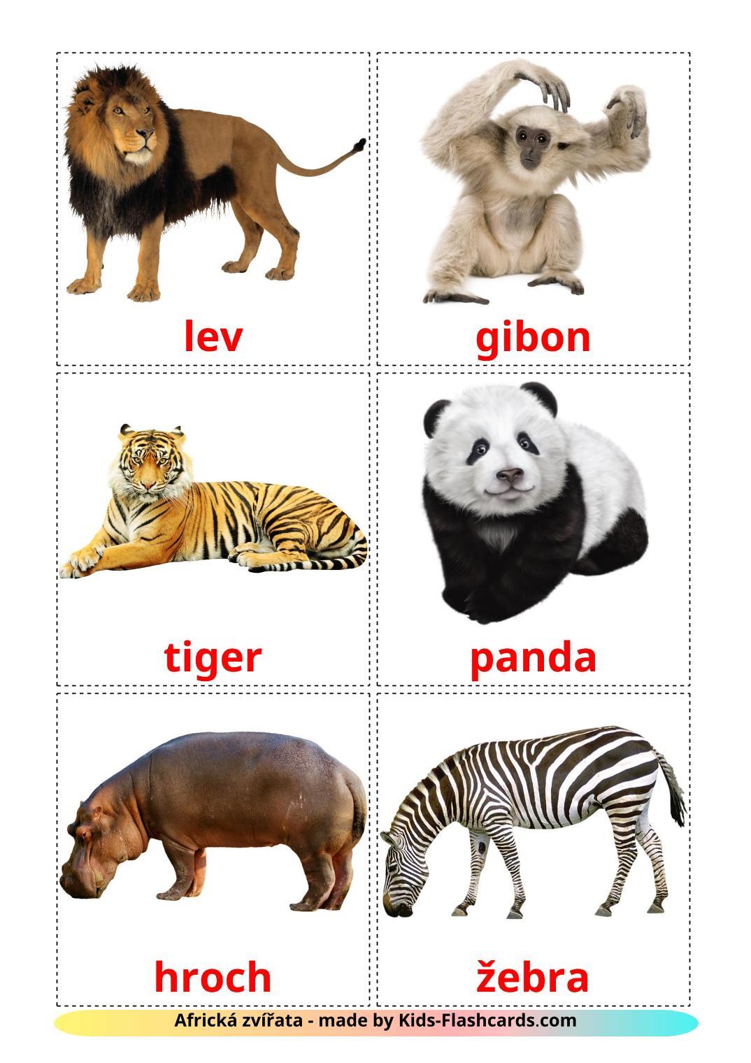 Jungle animals - 21 Free Printable czech Flashcards