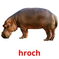 hroch picture flashcards
