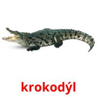 krokodýl picture flashcards