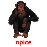opice picture flashcards