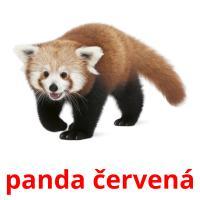 panda červená picture flashcards