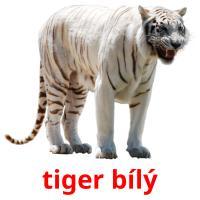 tiger bílý picture flashcards