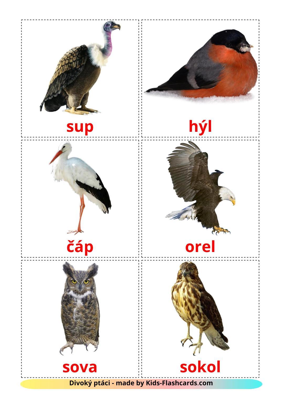 Wild birds - 18 Free Printable czech Flashcards
