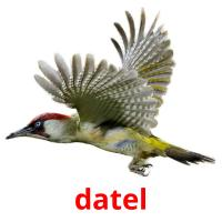 datel picture flashcards