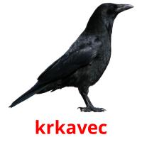 krkavec picture flashcards
