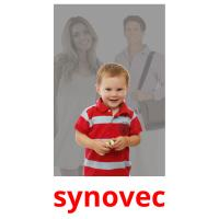 synovec picture flashcards