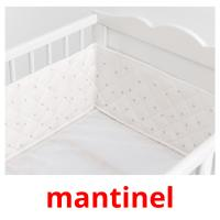 mantinel picture flashcards