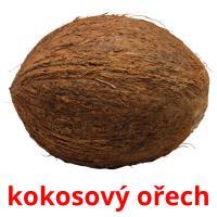 kokosový ořech picture flashcards