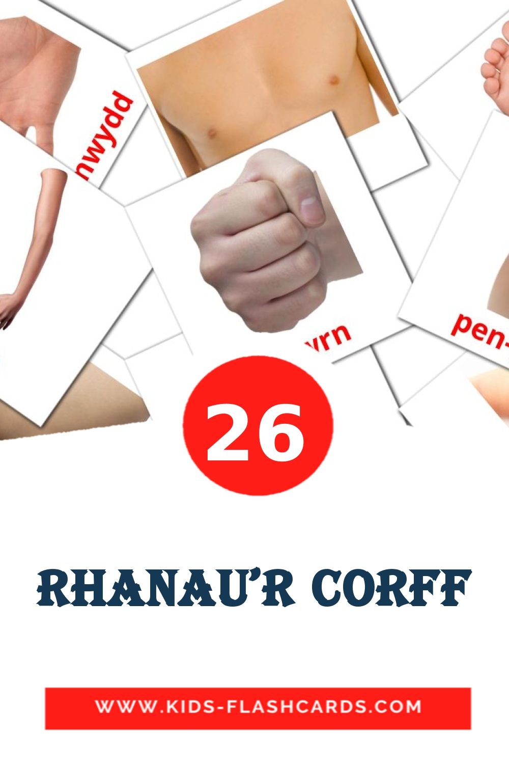 26 rhanau'r corff Picture Cards for Kindergarden in welsh