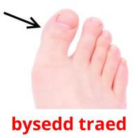 bysedd traed picture flashcards