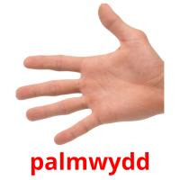 palmwydd picture flashcards