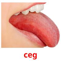 ceg picture flashcards