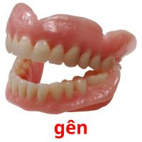 gên picture flashcards