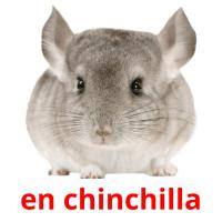 en chinchilla picture flashcards