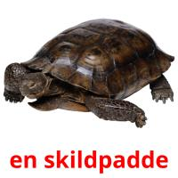 en skildpadde picture flashcards