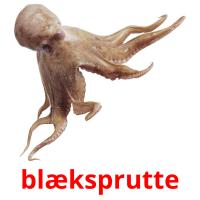 blæksprutte picture flashcards