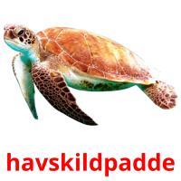 havskildpadde picture flashcards